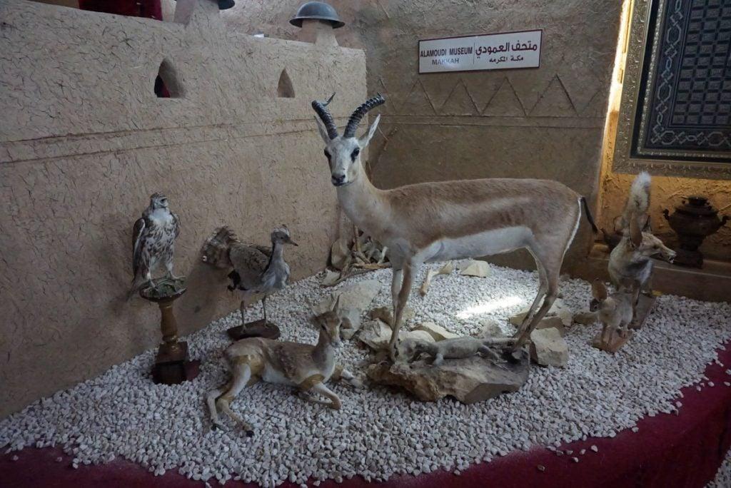Binatang-binatang gurun pasir yang diawetkan
